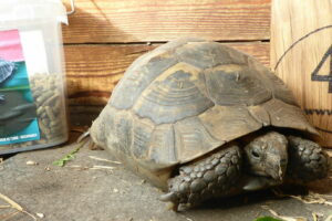 Schildpadden en vijvervissen