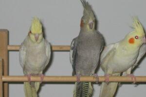 Vogels en duiven